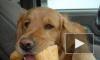 Владельцы отравленных в Сертолово собак сфотографировали ядовитую приманку