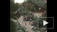 Перестрелка у посольства Израиля в Анкаре попала на виде...