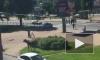 Петербуржцев предупреждают о встречах с лосями