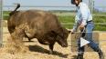 Защитники животных решили пободаться с ковбоями