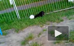 Пёс мастерски уводит мяч)))