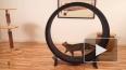 """""""НУ И ГАДЖЕТЫ"""": тренажер для кошек и сапфировый дисплей ..."""