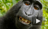 Вокруг селфи макаки разразился скандал из-за авторских прав