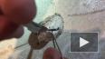 """""""Мешок с кошмарами"""": Видео с рождением милых паучат ..."""