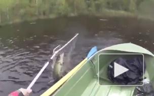 Упустил счастье: гигантская щука утопила рыбака вместе с лодкой и снаряжением