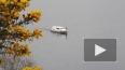 Ужасающее видео из Шотландии: на озере Лох-Несс вновь ...