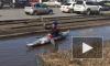 Забавное видео из Омска: каякер сплавился по лужам