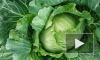 Вор-вегетарианец украл полторы тонны капусты