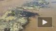 Экологи: Финский залив может превратиться в болото