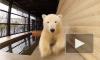 Появилось видео с медведицей Снежинкой из Ленинградского зоопарка