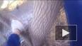 Новосибирский котёнок два дня ждал спасателей на дереве