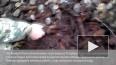 Рабочие раскопали целые арсенал боеприпасов на Царскосел...