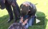 Житель Владимирской области показал на видео как убивал родного дядю
