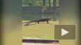 Студенты в Таиланде засняли на видео битву питона ...