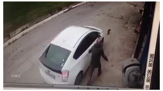 Видео: во Владивостоке девушка переехала на машине собаку на глазах у хозяина