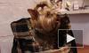 Петербургские догхантеры замышляют недоброе против собак. Любителей животных просят быть внимательнее