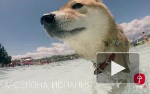 ShibaTrip: Сезон 1 Петербург - Барселона