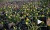 Теплая зима пробудила растения: как флора Петербурга переживет аномальную зиму