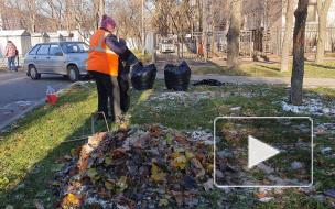 Более 86 тысяч кубометров мусора: в Петербурге завершился месячник по благоустройству