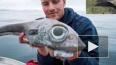 В Норвегии рыбак поймал рыбу-монстра с аномально большим...