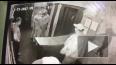 В сети появилось видео стрельбы в одном из клубов ...