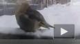 В Магнитогорске произошла массовая гибель птиц