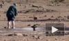 Видео: в ЮАР путешественник вытащил из трясины антилопу