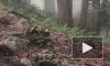 В горах у Сочи вторые сутки ищут пропавшего 13-летнего туриста