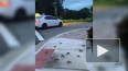 Видео: сотни крабов атаковали Флориду
