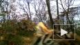 Уникальное видео из Приморья: тигрица с детьми устроила ...