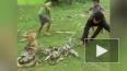 На Филиппинах отважные дети спасли собаку из смертельных ...