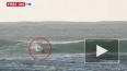 Видео из Австралии: Дельфин прыгнул на серфера