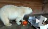 В Ленинградском зоопарке обитателей накормят тыквами