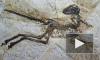 В Китае нашли останки пернатого динозавра. Зачем ему перья, ученые не знают