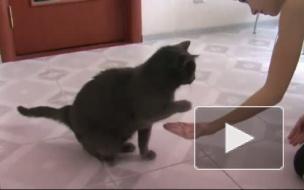 Дай лапу, кот!
