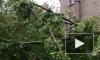 Ураган в Москве: Есть погибшие и пострадавшие среди людей, сотни поваленных деревьев, десятки поврежденных автомобилей