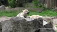 Ученые нашли у волков способности выполнять команды