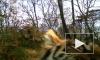 """Уникальное видео из Приморья: тигрица с детьми устроила """"фотосессию"""""""