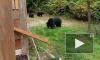 Видео: канадец вежливо попросил семью медведей покинуть его двор