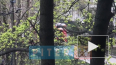 Во Фрунзенском районе горит квартира в жилом доме