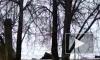 В Смоленске появились собаки экстремалы, которые гуляют по крышам