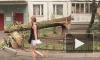Упавшее на Есенина, 26 дерево разбило стекла в квартирах