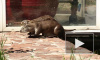 Лениградский зоопарк попрощался с выдрами