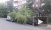 В Иркутске дерево упало на автомобили