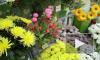 Что подарить на 8 марта жене, а что любовнице? Советы флориста