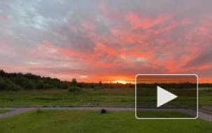 Розовый закат озарил небо над Петербургом и Ленобластью