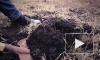 Криминал в большом городе: петербурженку расчленили и закопали останки в огороде