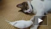 Кот и попугай. Нетрадиционная любовь