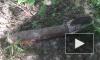 Огромную мину вынесло течением к Васильевскому острову в Петербурге