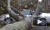 Ураган «Сэнди»: список жертв растет, разрушения ужасают